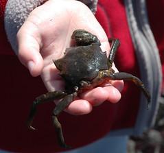 Julian Holding a Crab