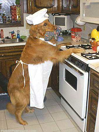 Let the dog do the cooking