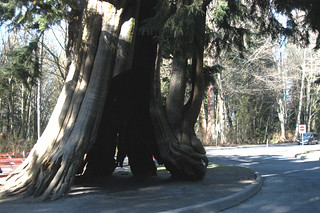 Hollow Tree 의 이미지. 2005 tree nature vancouver outdoors