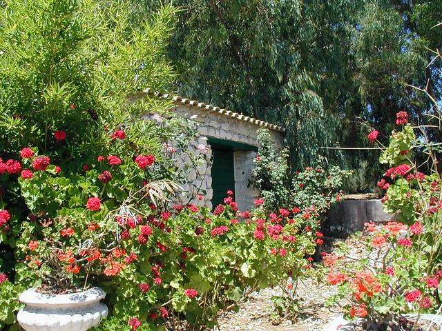 Greek Garden 2 Flickr Photo Sharing