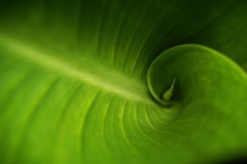 fibonacci green