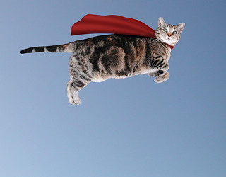 The Caped Kitty flies again