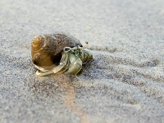 Hermit Crab on the Beach - a photo on Flickriver