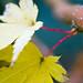 MSwanson - Wide - Leaf 24 by jeremywho