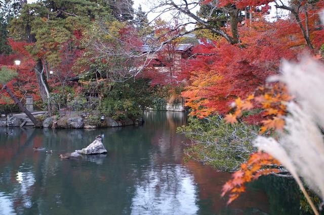 Autumn Leaves @ Eikando