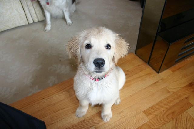 Puppy Orig