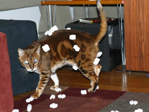 cat + packing peanuts = funny