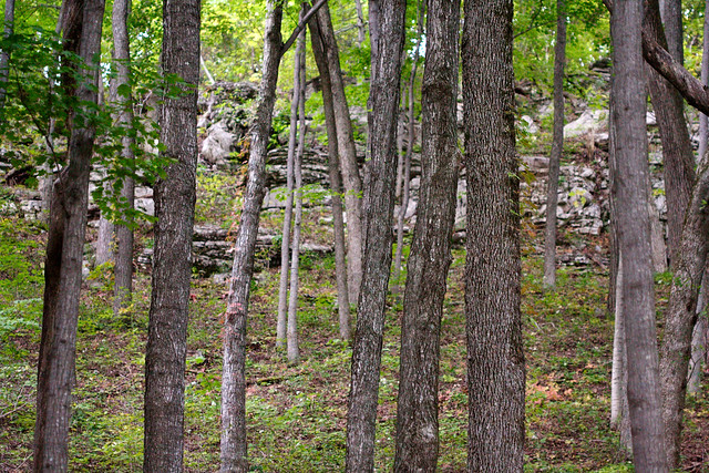 Landscaping Rock Berea Ky : And the forest will echo with laughter flickr photo