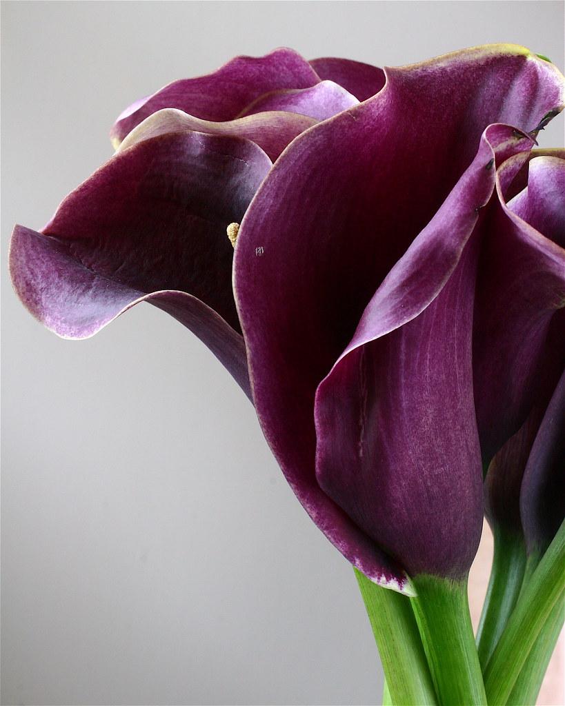 Purple Calla Lily Cake Decorations