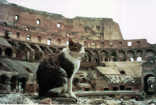 Colosseum Kitty