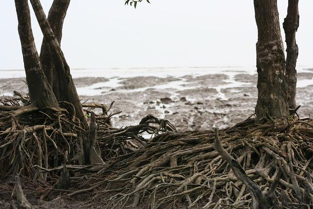 Parque Nacional de Sundarbans, Bengala Occidental, India
