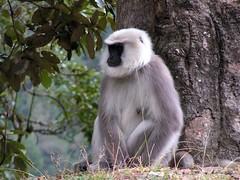 Monkey in Bhutan