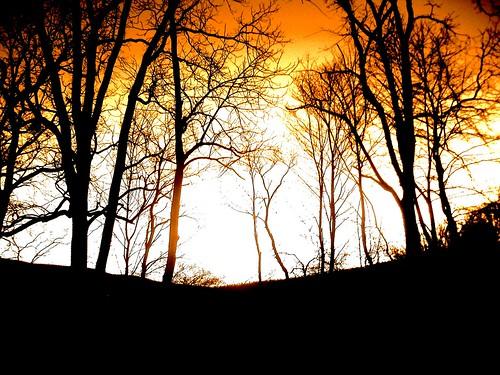 trees sunset orange fall nature landscape
