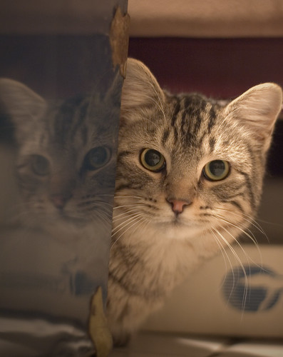 girl cat names wallpaper