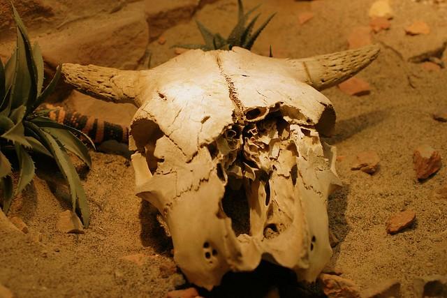 cow skull and desert - photo #14