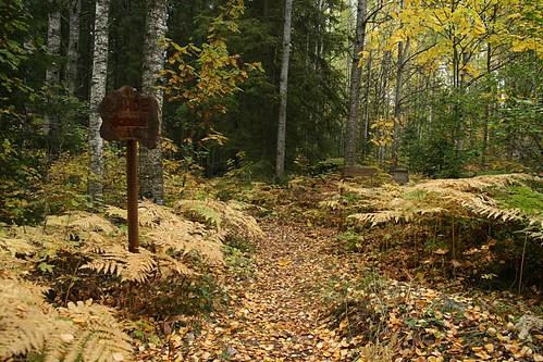 autumn trees fall forest suomi finland geotagged northerneurope psstandard tamron1750 hyytiälä geo:lon=24288995 geo:lat=61846304
