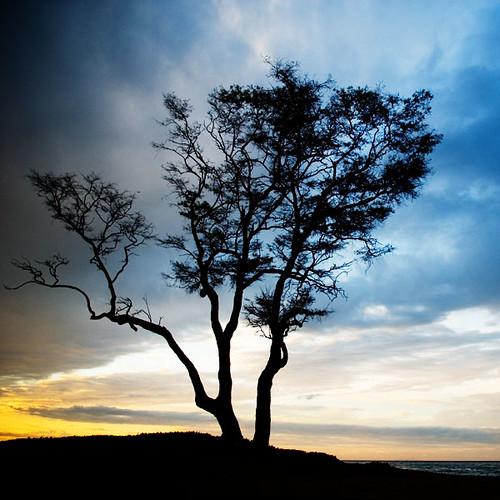 tree sunrise d200 carpinteria nikonstunninggallery carptree