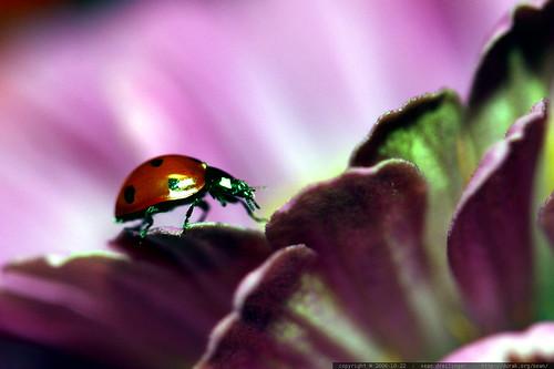 ladybug profile    MG 2684