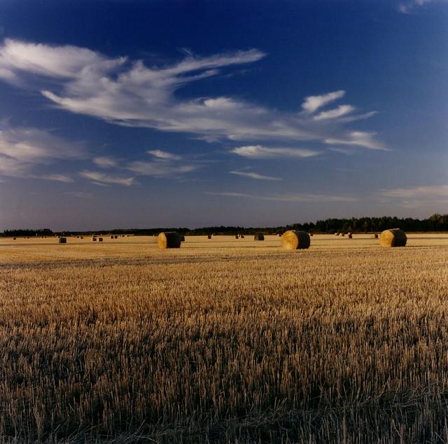 Grassland harvest 1991