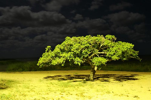 Figueira numa noite fria noite de lua cheia  / A fig tree in a cold full moon night by Gutemberg Ostemberg