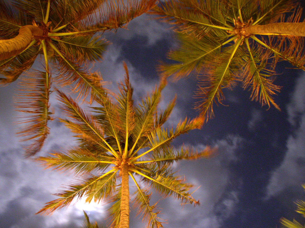 Palms in Sri Lanka