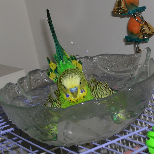 Kiwi's Best Bath Ever