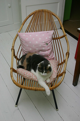 Boo On The New Old Chair