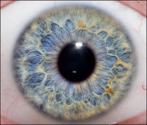 Amazing Close-up Photographs of the Human Eye and How to ...