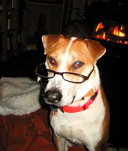Max & glasses.jpg
