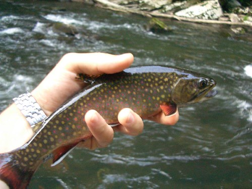 May 2007 backwater angler for Md trout fishing
