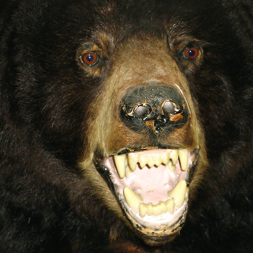 Time to punch a bear