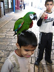 parrot chilling on head