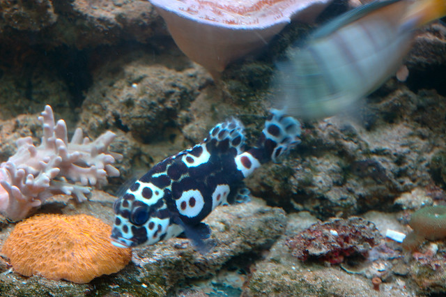 Unique aquarium fish Flickr - Photo Sharing!