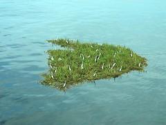 coral reef(0.0), algae(0.0), seaweed(0.0), marine biology(0.0), shore(0.0), terrain(0.0), islet(0.0), ocean(1.0), shoal(1.0),