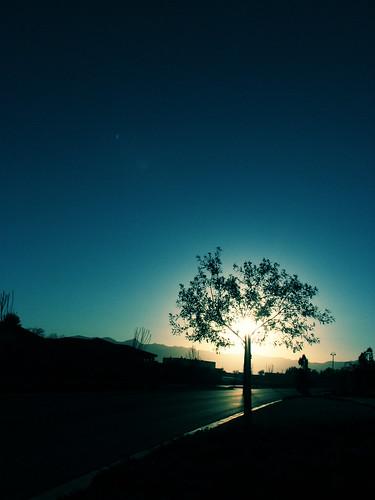 sun tree canon landscape nevada pahrump bychexee s3is canons3is photojourneys
