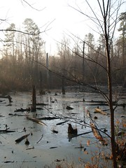 Early AM Swamp2