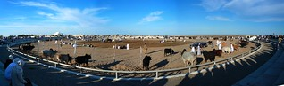 Barka bullring panorama