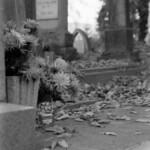 Flowers at the Cemetery  - Brasov, Romania