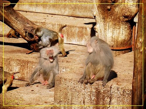 Monos by tonykuki