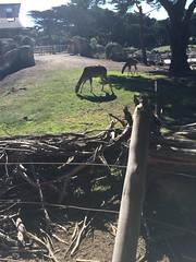 San Francisco Zoo Nov 7 2015