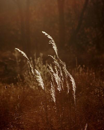 grass dawn searchthebest wetlands grasses flowrbx lincolnsalinewetlands