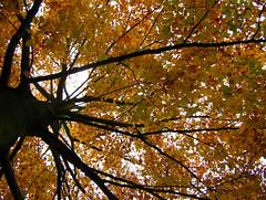 06-11-19_automne_08
