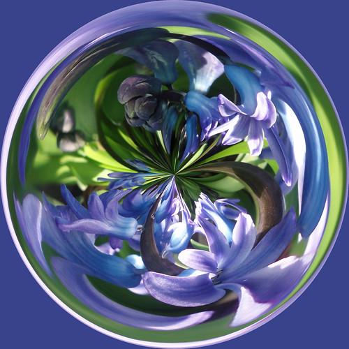 Amazing flower circle