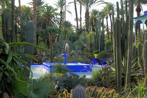 A photo a day jardin majorelle marrakech for Jardin yves saint laurent maroc