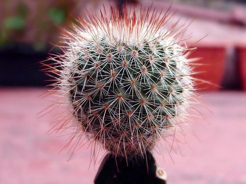 What Is A Cactus The Life Portfolio