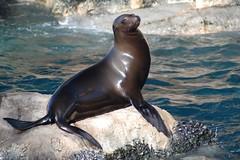 SeaWorld - Sea Lions