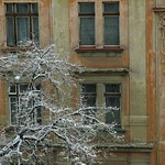 Tree at Winter - Prague, Czech Republic