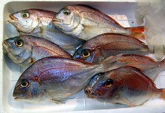 animal, fish, fish, seafood, red snapper, tilefish, food,