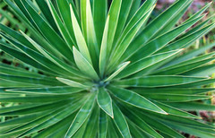 2002 09 16 spiny plant
