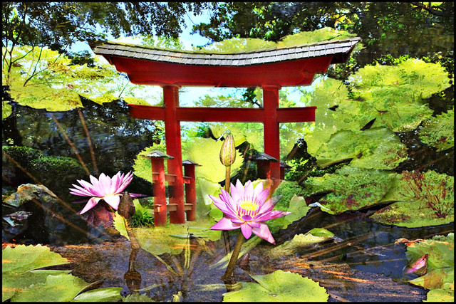 Birmingham Botanical Garden And Japanese Gate And Lilys